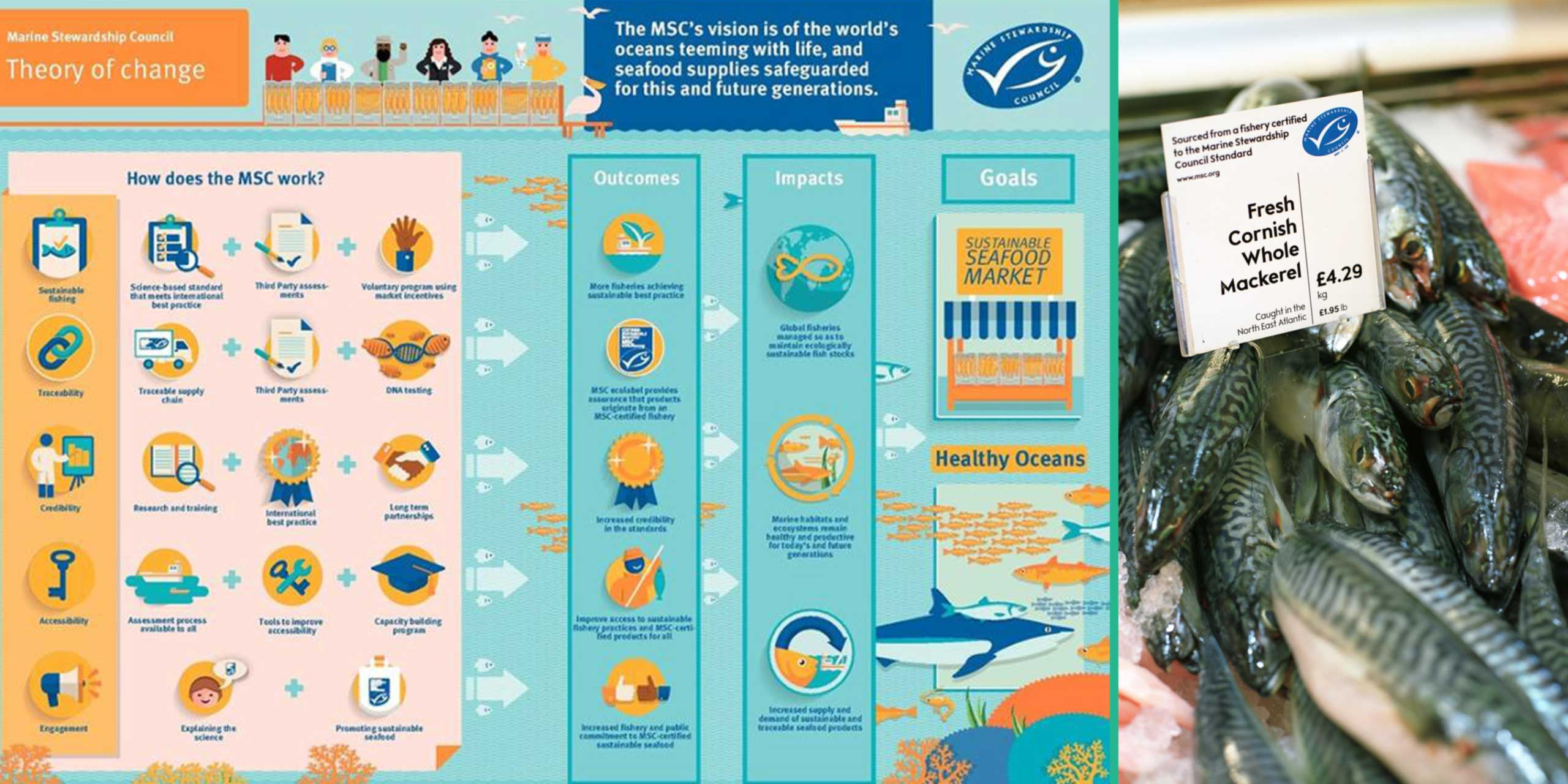 http://staging.skoll.org/wp-content/uploads/2014/02/marine-stewardship-council-sl2.jpg
