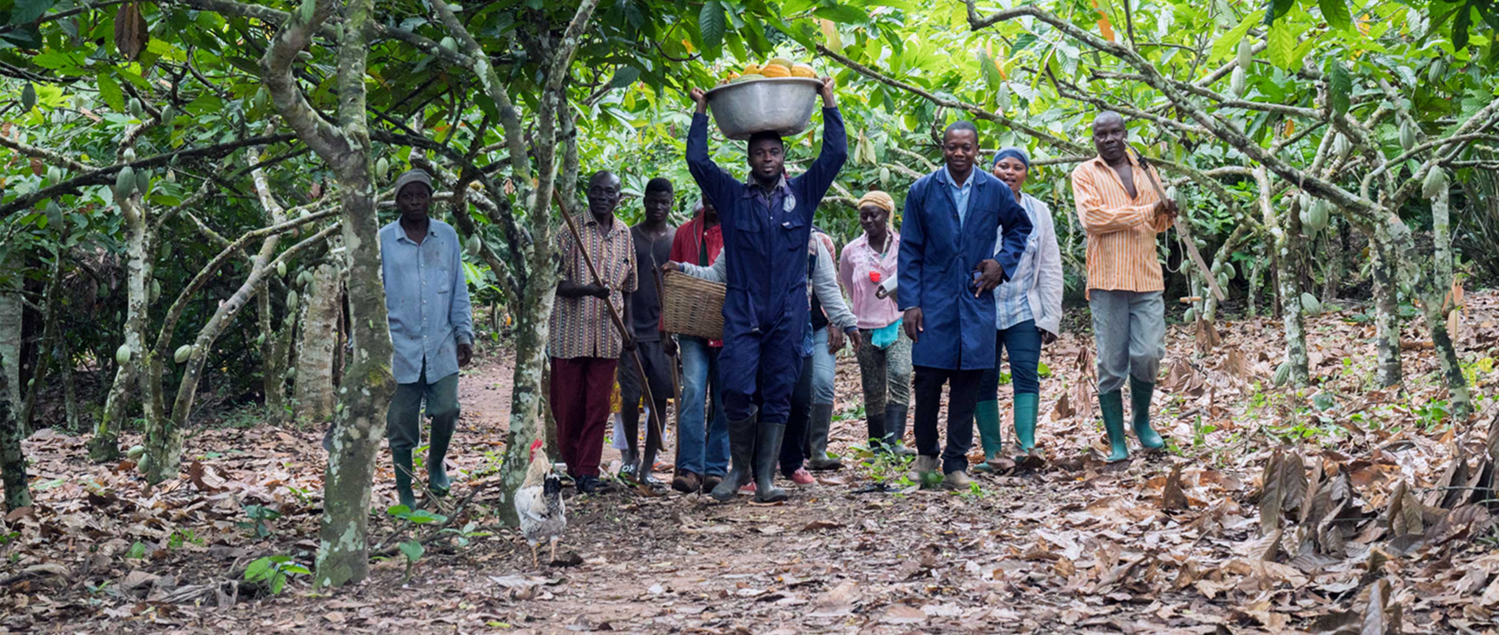 Sustainable Solutions at the Base of the Supply Chain: The Case for Cocoa
